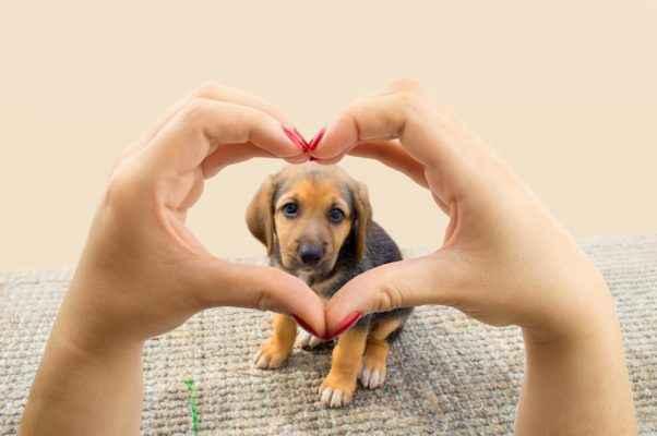 Mulher que ama cachorros fazendo imagem do símbolo do amor