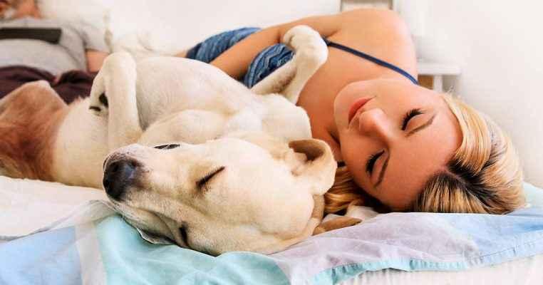 dormir com um cachorro faz bem