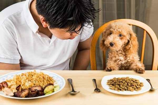 Cachorro sentado na mesa igual um humano