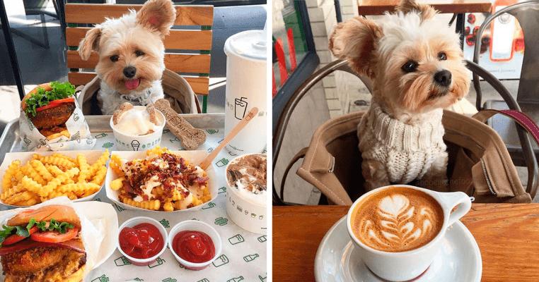 cachorro alimentando como se fosse humano - isso é também maus tratos aos animais